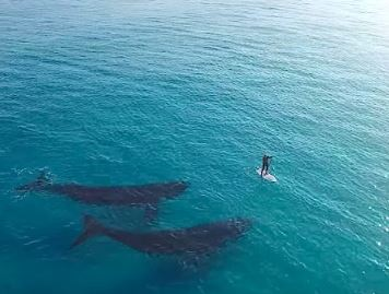 TwoWhales_PaddleBoard